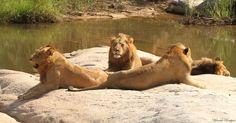 Selati (Southern) males
