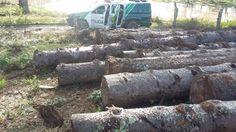 Ele não tinha autorização de órgão ambiental para a derrubada de árvores nativas