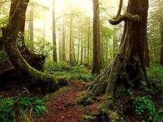 Vert forêt merveilleuse.