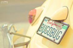 Bug O Bug