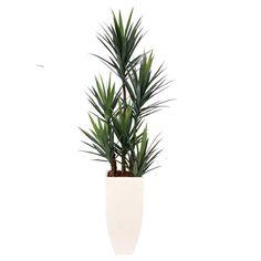 Yucca in a Tall White Terrazo Square Pot