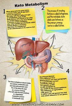 Keto Metabolism