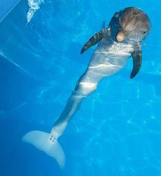 Winter the Delphin