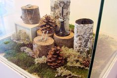 Birch log jewelry display