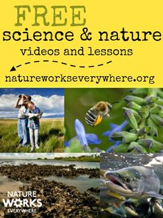Bookmark this site with free science and nature lessons for teachers!