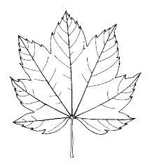 Coloriage dessin feuilles automne vigne coloriages dessins d 39 automne pinterest feuille - Feuille de vigne dessin ...