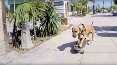 "Virales Video ""Hund fährt Skateboard"""