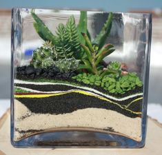 Open Face Succulent Terrarium - Colorful Sand Shockwaves