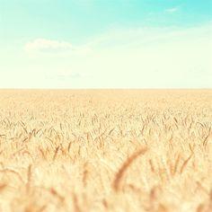Pure Nature Wheat Field #retina #iPad #Air #wallpaper