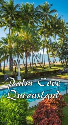 Check out the best Palm Cove Resorts and end up in a beautiful spot for an awesome vacation. Here are the top resorts in Palm Cove, Queensland. Romantic Resorts, Luxury Resorts, All Inclusive Resorts, Cairns Queensland, Queensland Australia, Best Hotels, Amazing Hotels, Hotel Hacks, Australia Holidays