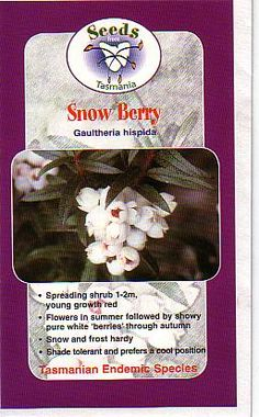 Gaultheria hispida [Snow Berry] part of the Ericaceae family with White flowers flowering in Summer avaliable from Australian Native Plants located in Ventura, CA Garden Projects, Garden Ideas, Plant Nursery, Container Plants, Native Plants, Shrubs, White Flowers, Frost, Nativity