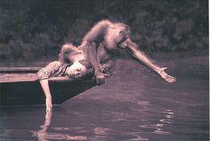 gregory colbert orangutan / jose