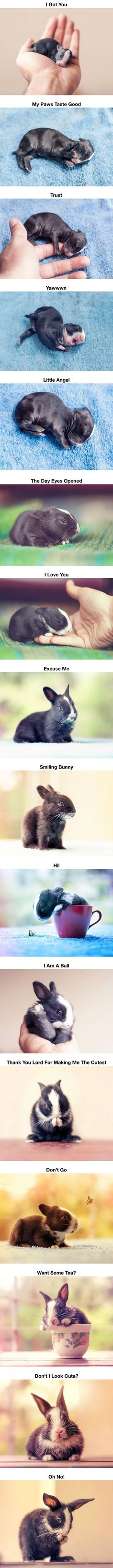 DailyFailCenter | Funny Pictures Updated Daily