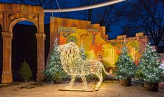 Zoo Lights: the phenomenon that turns zoos – and other wildlife spaces! – into visitor attractions at night Wildlife Tourism, Zoo Lights, Jeju Island, Light Trails, Zoos, Time Art, After Dark, Natural World