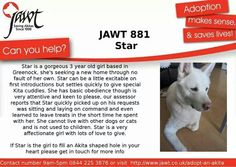 Do you have a stellar home for a little star 3 Year Old Girl, Japanese Akita, Can You Help, Make Sense, Trust, Star, Life, Stars