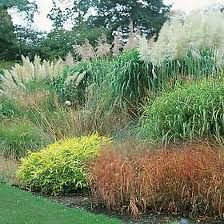 1000 images about ornamental grass ideas on pinterest for Front yard ornamental grasses