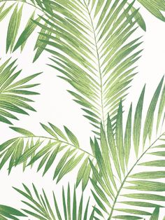 Transform a room with ease with this simple to use Artistick Tropical Palm Self Adhesive Wallpaper. The simple yet effective design features hand painted style palm leaves in tones of green on a pale cream background with a smooth matte finish. Ideal for feature walls and upcycling, simply peel the backing off and apply the high quality wallpaper to any flat surface. If you change your mind the paper can be removed and repositioned without leaving any sticky residue behind. Palm Leaf Wallpaper, Tropical Wallpaper, Feature Walls, High Quality Wallpapers, Self Adhesive Wallpaper, Exotic Pets, Main Colors, Pet Birds, Palm Trees