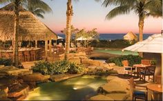 Hawaii Resort Syle Living & Lanscapes Malayan Coconut Palms RealPalmTrees.com