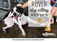 rover dog sitting review