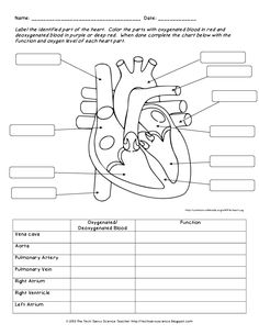 Free parts of the heart worksheets describe the function of the anatomy labeling worksheets bing images ccuart