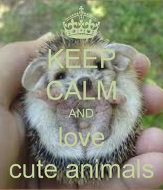 KEEP CALM AND love cute animals - KEEP CALM AND CARRY ON Image ...