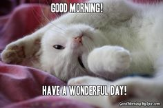 Enjoy some good morning memes! Find the perfect good morning funny meme, good morning meme for her, him, friends, or good morning beautiful meme. Funny Good Morning Memes, Cute Good Morning Quotes, Good Morning Images, Morning Pics, Morning People, Memes Humor, Cat Memes, Funny Memes, Good Morning Facebook
