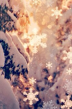 Snowflakes in the sun