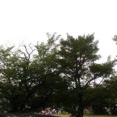おはようございます曇り空の日曜日今日は子供会の資源回収雨やんでよかったね() #sky #cloud #空 #雲 #イマソラ #goodmorning #おはよう