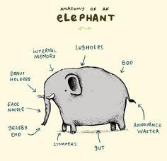 194 Best Haathi images in 2014 | Elephant, Elephant love