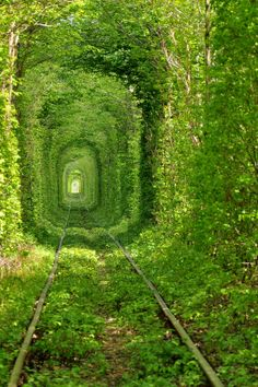 "There is a town known as Klevan where not far from the Ukrainian regional center Rivne.It has one of the most romantic places in the world called ""The Tunnel of Love"". During the warm months of the year you can see  a fairy green tunnel along one kilometer long section of the railway."