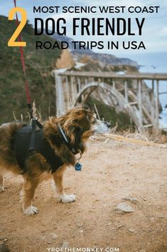 This is a guide to two scenic dog friendly road trips in Northern California. Includes resources for planning your very first west coast road trip. Road Trip With Dog, Us Road Trip, Road Trip Hacks, California Travel, Northern California, Canada Travel, Travel Usa, Beach Travel, Us Vacation Spots