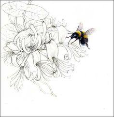 Honeysuckle drawing