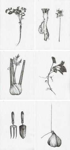 Black and white coriander