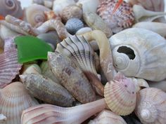 Seashells and sea glass found on Lido Beach, Florida