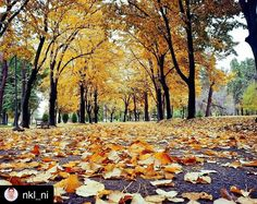 #Autumn walk in #Fortress. More info about #Fortress of Niš on https://www.wheretoserbia.com #wheretoserbia #Serbia #Travel #Holidays #Trip #Wanderlust #Traveling #Travelling #Traveler #Travels #Travelphotography #Golden #leaf #tbt #Travelpic #Travelblogger #Traveller #Traveltheworld #Travelblog #Travelbug #Travelpics #Travelphoto #Traveldiaries #Traveladdict #Travelstoke #TravelLife #Travelgram #Travelingram