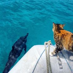 Amelia the Cat Sails Around the World with her Mom. l #cats #humans #traveltheworld