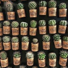 Magazine on Cactus by cactusira :) Deco Cactus, Cactus Pot, Cactus Flower, Flower Cafe, Cacti And Succulents, Planting Succulents, Cactus Plants, Planting Flowers, Air Plants
