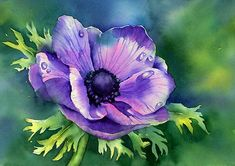 "art by anne mortimer | Purple Anemone"" by Ann Mortimer 