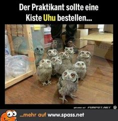 >>>Cheap Sale OFF! >>>Visit>> They're coming for us Love Harry Potter? Check out our Harry Potter Fanfiction Recommended reading lists - fanfictionrecomme. Memes Do Harry Potter, Fans D'harry Potter, Harry Potter Fandom, Harry Potter Stuff, Harry Potter Theme, Owl Pictures, Funny Animal Pictures, Funny Photos, Funny Owls