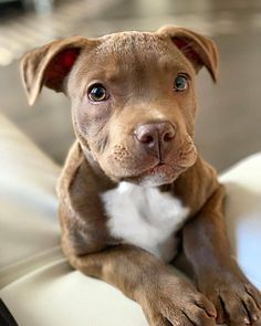 Give him a name ------------------------------------------------------------ Follow @bullymagazine ⏪ for more… Hündchen Training, Cute Baby Animals, Animals And Pets, Cute Funny Animals, Puppy Care, Cute Dogs, Sweet Dogs, I Love Dogs, All Dogs