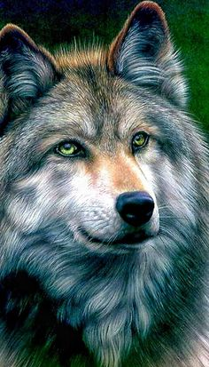 Beautiful color pencil drawing Grey Wolf by Colin Howard . Wolf Spirit, Spirit Animal, Beautiful Creatures, Animals Beautiful, Tier Wolf, Animals And Pets, Cute Animals, Draw Animals, Wild Animals