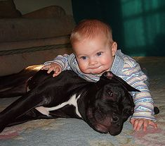 yep pit bulls are so mean, omg that kid isn't safe around that dog it might attack lol NOT!! this will be my children's protectors <3