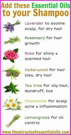 Here are 7 essential oils to add to your shampoo for healthy and luscious hair! Here are 7 essential oils to add to your shampoo for healthy and luscious hair! Essential Oils For Hair, Doterra Essential Oils, Young Living Essential Oils, Essential Oil Blends, Essential Oil Diffuser, Homemade Essential Oils, Essential Oil Guide, Essential Oils For Vertigo, Lemongrass Essential Oil Uses