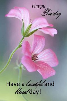 Happy Tuesday Have A Beautiful Blessed Day good morning tuesday tuesday quotes…