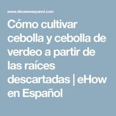 Cómo cultivar cebolla y cebolla de verdeo a partir de las raíces descartadas | eHow en Español
