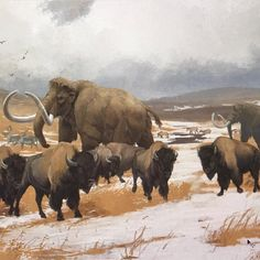 A mammoth passes through a herd of bison