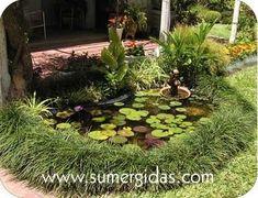 Garden Insects, Mosquitos, Ikebana, Floral, Plants, Factory Farming, Ponds, Amphibians, Florals