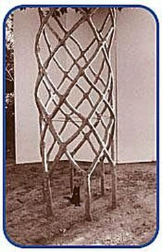 Axel Erlandson's Tree Sculpture: Young Basket Tree