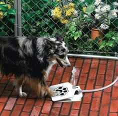 Outdoor Dog Water Fountain - Step On Dog Water System - Our Water Dispenser For Dogs Provides A Safe Self Watering Doggie Fountain For Your Pets - Never Leave Your Dog Without Fresh Water Again *** Click image for more details. (This is an affiliate link) Dog Water Fountain, Drinking Fountain, Drinking Water, Water Fountains, Fountain Pen, Pet Dogs, Dog Cat, Pet Pet, Baby Dogs