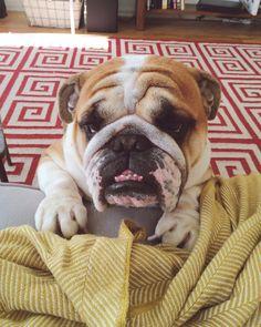 duncanthebulldog:A little help pwease